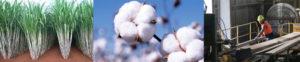 Kenmore sugar cotton timber